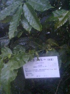 image/tenru-2005-10-17T01:59:27-2.JPG