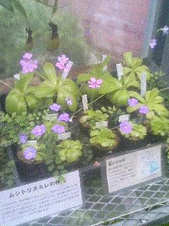 image/tenru-2005-10-17T21:50:24-1.JPG