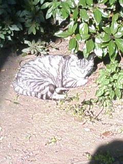 image/tenru-2005-11-22T23:07:22-1.JPG