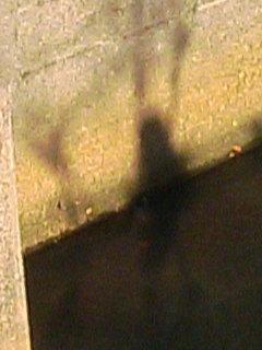image/tenru-2006-01-15T16:41:42-2.JPG