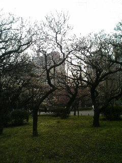 image/tenru-2006-03-12T13:58:19-1.JPG