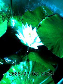 image/tenru-2006-07-08T23:26:29-1.jpg